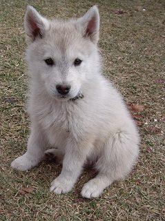 1-1-Tala-puppy
